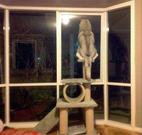 perro en sentado en el perchero del gato