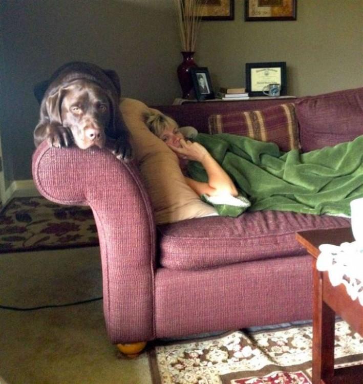 perro en el sofa con su dueño