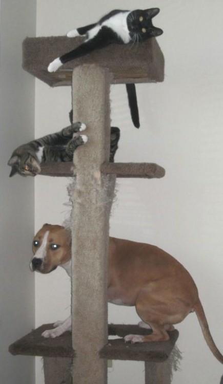 perro en perchero junto a gato