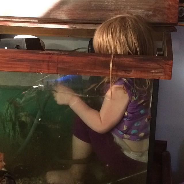 niña esta dentro de la pecera para jugar de mas cerca con los peces