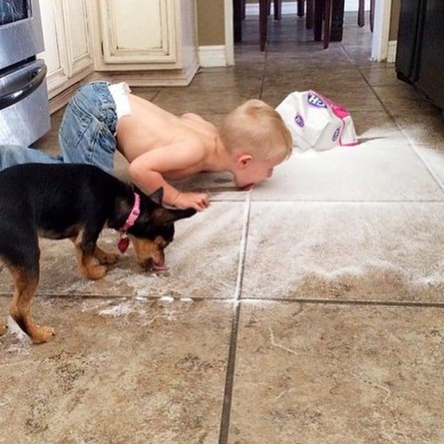 niño comiendo la azucar derramada como el perro