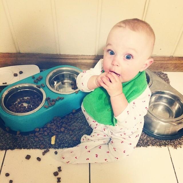 bebé comiendo croquetas de la mascota
