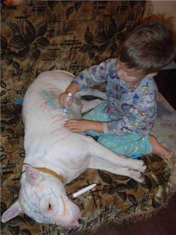 niño pintando rayas a perro cara de mula que esta acostado tranquilo