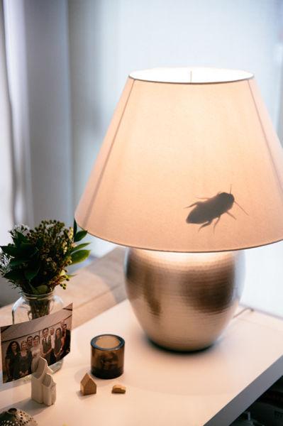 broma cucaracha en la lámpara de la casa