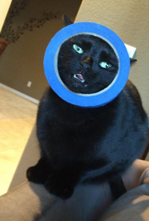 gato con cinta adhesiva atorada