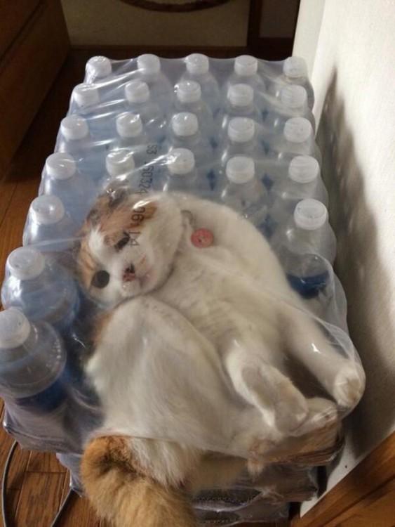 refrescarse para el gato fue dificil