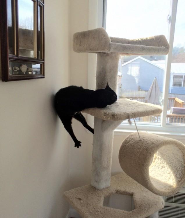 gato negro atrapado en su perchero