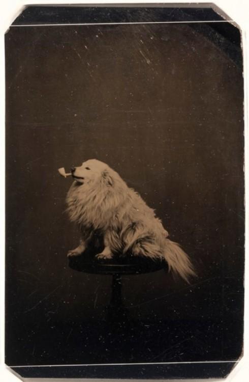 perro con pipa en el hocico