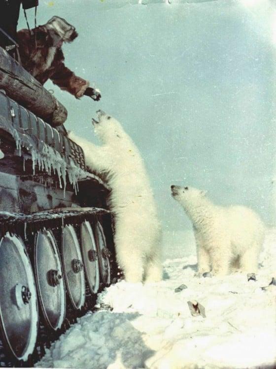 soldados rusos alimentando a osos polares