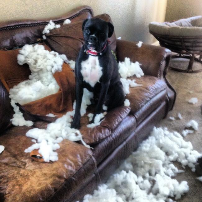 perro destruye sillon