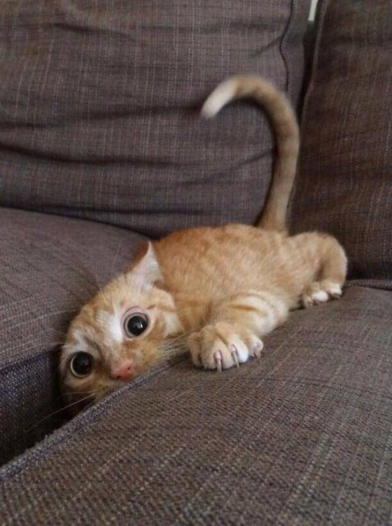 gato buscando cosas dentro del colchon