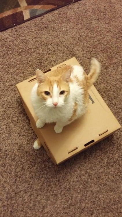 gato arriba de caja tiene atrapado al otro