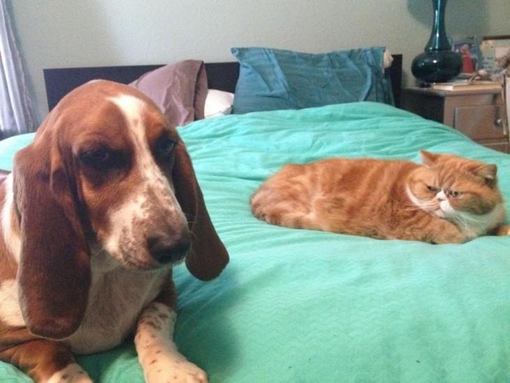 gato con ojos de odio hacia perro