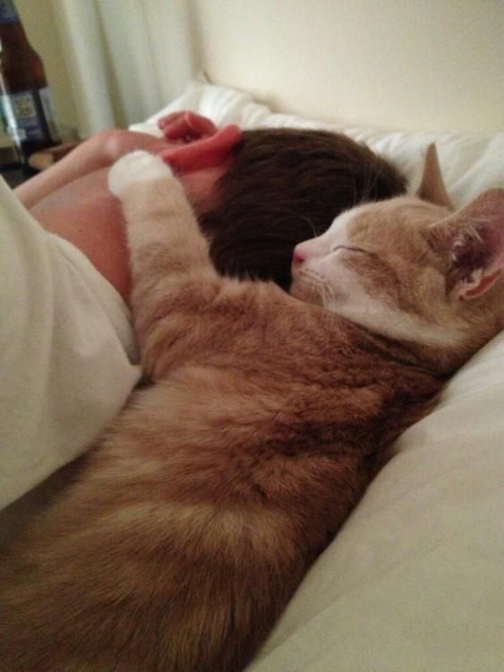 gato abrazando a niño dormido