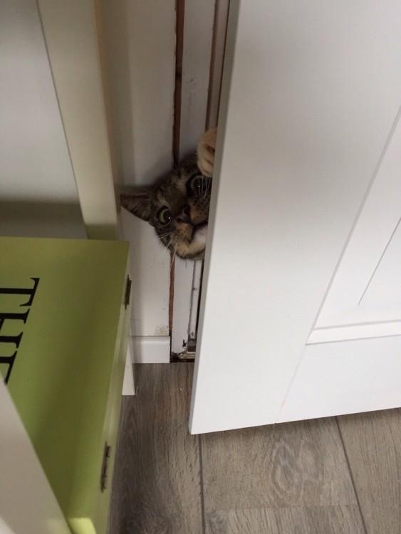 gato queriendo entrar con la cara de asustado