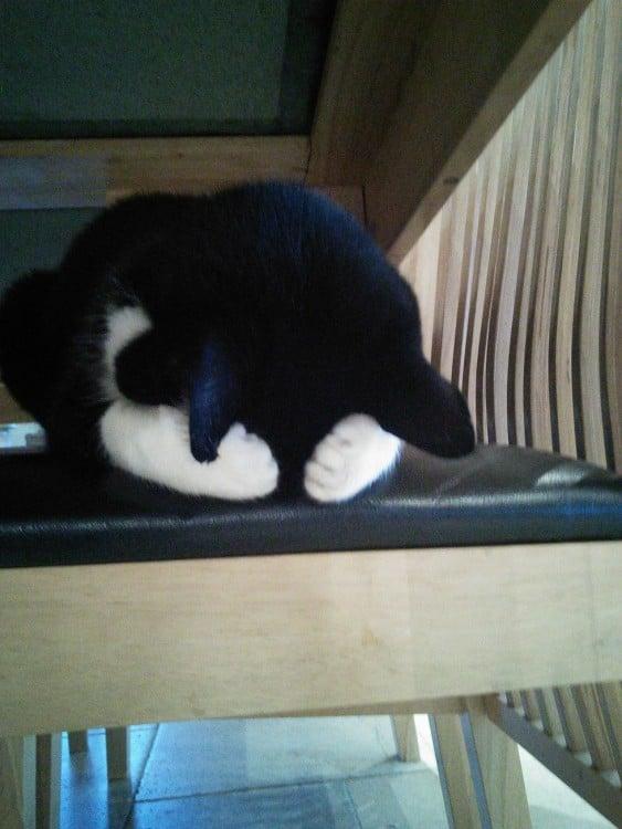 gato asustado se tapa la cara por el ruido de la aspiradora