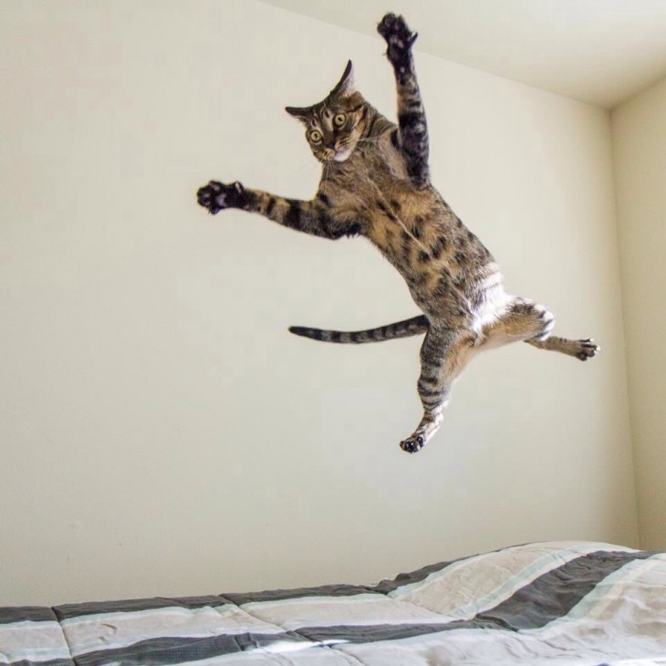 gato saltando estrepitosamente
