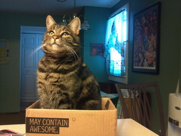 gato sentado en una caja de carton