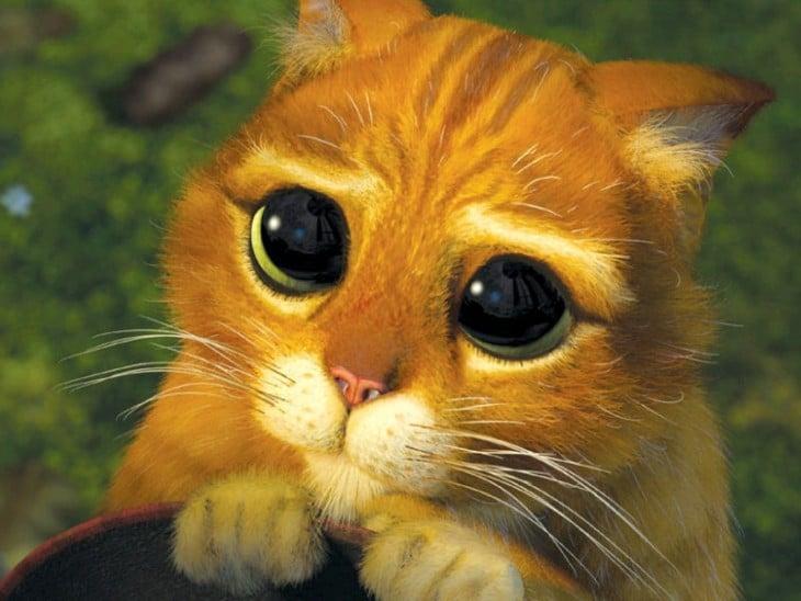 gatito de shrek haciendo ojitos