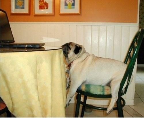 perro dormido sobre la mesa