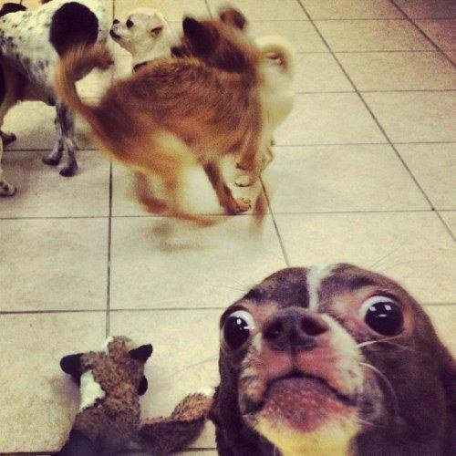 selfie de perrito