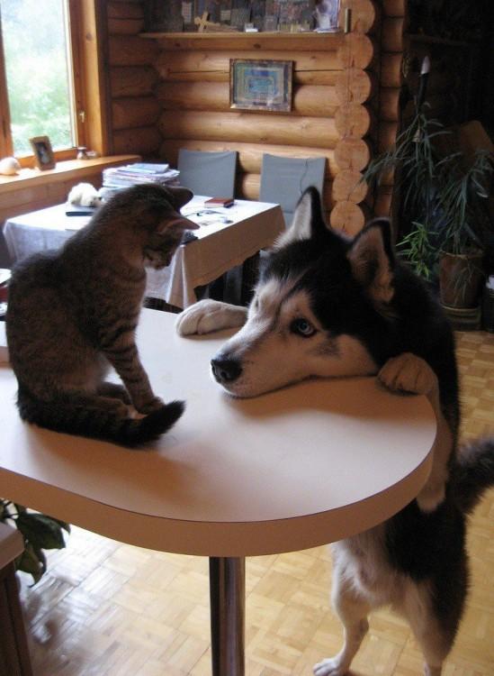perro queriendo jugar con gatto
