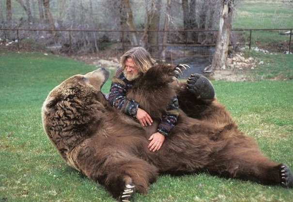 oso feliz de que le froten la barriga