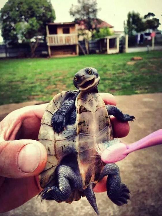 tortuga feliz porque la bañan