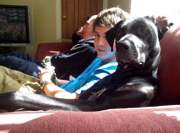 perro sentado en el sillon como sus dueños