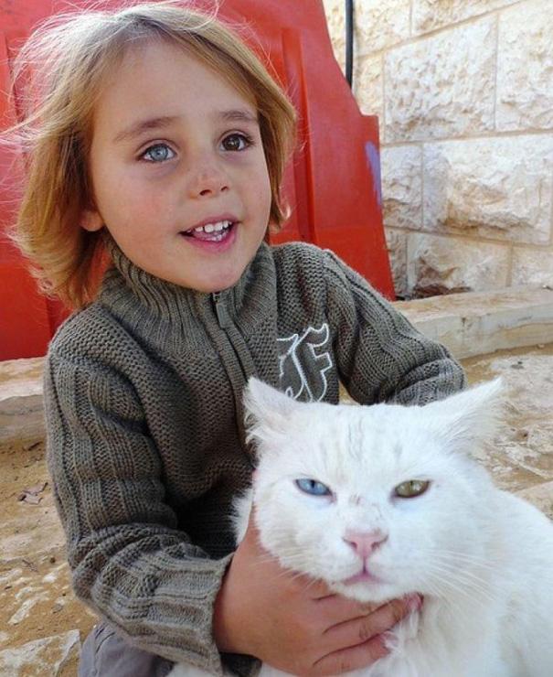 gato y niño israelí coinciden con heterocromía