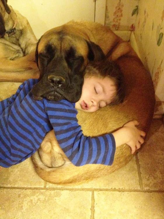 gran danes y pequeño se utilizan de almohada para dormir