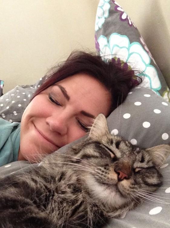 gato acostado en la cama de la sera