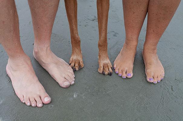 cuatro pies de humanos y dos patas de perro sobre la arena del mar