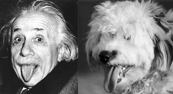 perro que se parece al cientifico Albert Einstein