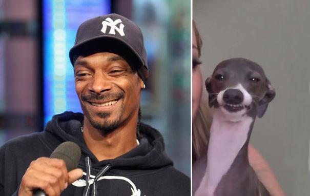 snoop dog se parece al perro de la izquierda