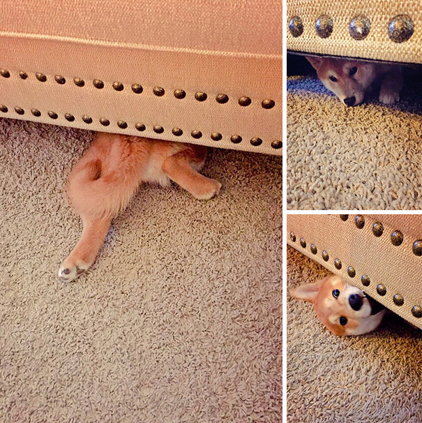 perro asomandose bajo la cama