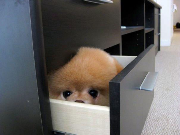 perro escondito en un cajon
