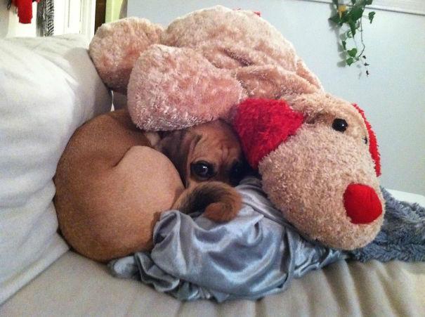 perro escondidobajo el reno de peluche