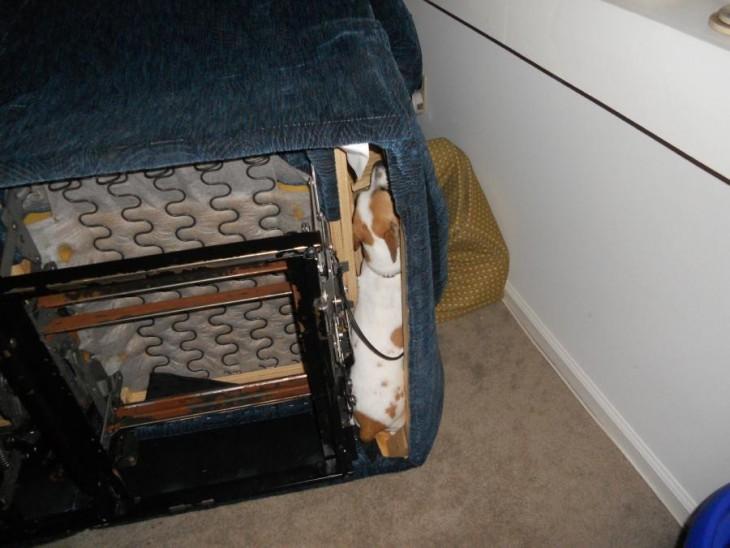 perro escondido en los resortes del sofa