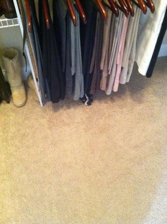 gato en los pantolones