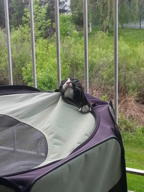 gato saliendo de su casa de campaña