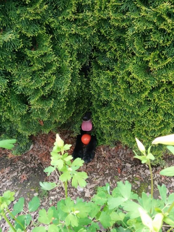 perro escondido entre las ramas de un arbol