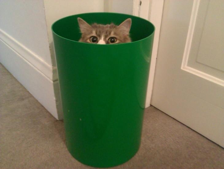 gatito escondido en cesto