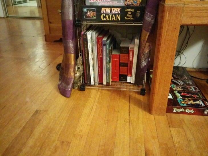 gato escondido en librero
