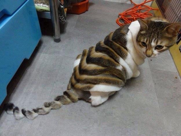 cortan el cabello a gato de forma extraña