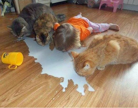 Nena tomando leche del piso igual que los gatos