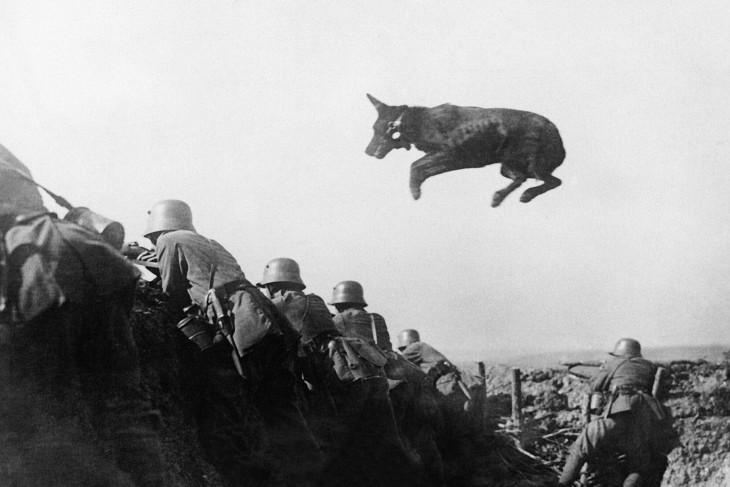 Un perro alemán despacho lleva mensajes a la línea de frente durante una ofensiva alemana en enero de 1918