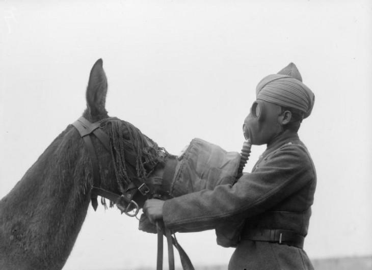 soldado Indio Británico le pone maáscara de gas a su mula para evitar su muerte