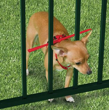 perro houdini o escapista