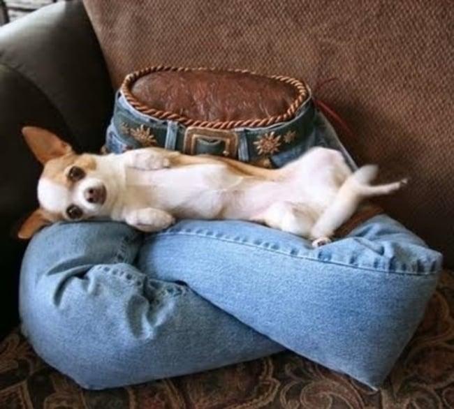 perros sobre cojin de pantalones de mezclilla